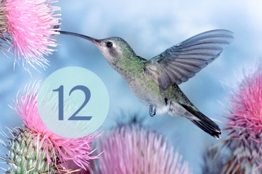 12 současných učitelů meditace: o probouzení