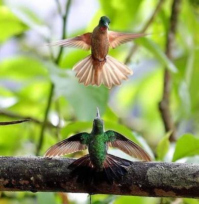 Medicína kolibříka: živost a radost. foto: Nusta.cz